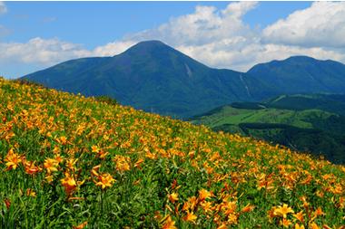 中国のシャングリラ、雲南に花農園