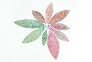 ヒノキの葉(花材)